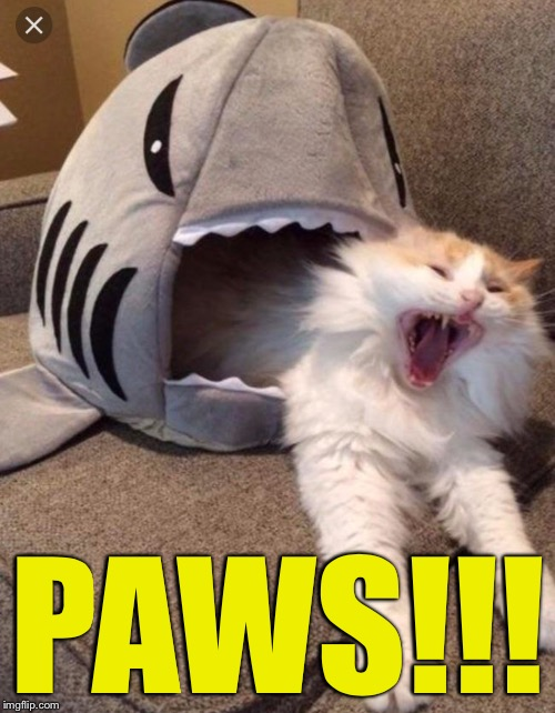 Gonna need a first-aid Kitten | PAWS!!! | image tagged in memes,shark,paws | made w/ Imgflip meme maker