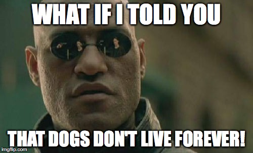 But sometimes, they do live a really long life! | WHAT IF I TOLD YOU THAT DOGS DON'T LIVE FOREVER! | image tagged in memes,matrix morpheus,dogs,life,dog life,life span | made w/ Imgflip meme maker
