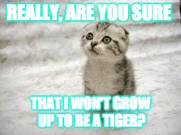 Sad Cat |  REALLY, ARE YOU SURE; THAT I WON'T GROW UP TO BE A TIGER? | image tagged in memes,sad cat | made w/ Imgflip meme maker