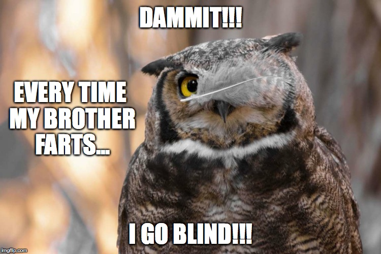 Blinders :-P | DAMMIT!!! I GO BLIND!!! EVERY TIME MY BROTHER FARTS... | image tagged in brother owl | made w/ Imgflip meme maker