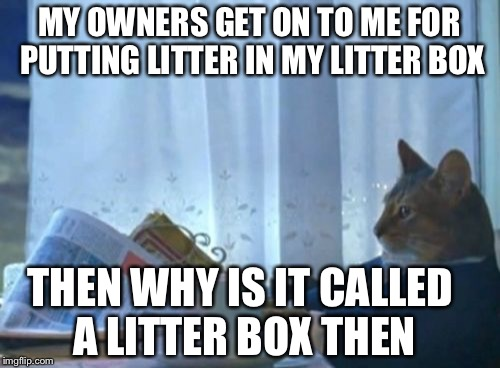 I Should Buy A Boat Cat Meme | MY OWNERS GET ON TO ME FOR PUTTING LITTER IN MY LITTER BOX THEN WHY IS IT CALLED A LITTER BOX THEN | image tagged in memes,i should buy a boat cat | made w/ Imgflip meme maker