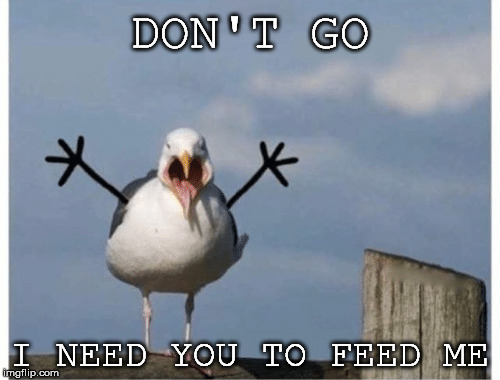 DON'T GO I NEED YOU TO FEED ME | made w/ Imgflip meme maker