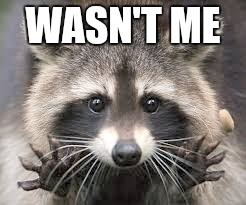 Wasn't me | WASN'T ME | image tagged in raccoon,wasn't me | made w/ Imgflip meme maker