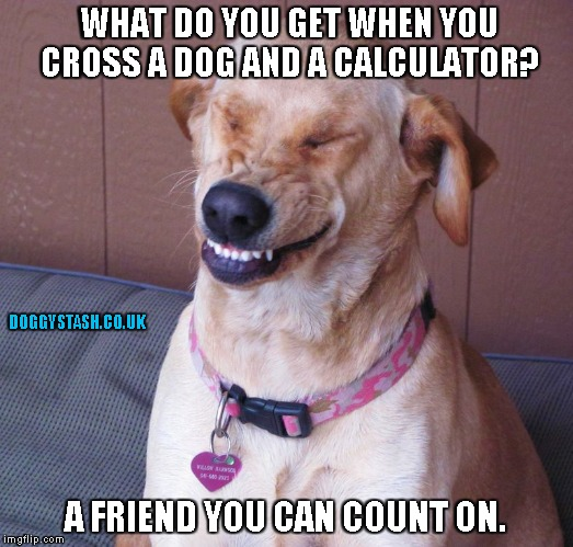 WHAT DO YOU GET WHEN YOU CROSS A DOG AND A CALCULATOR? A FRIEND YOU CAN COUNT ON. | image tagged in laughing dog | made w/ Imgflip meme maker