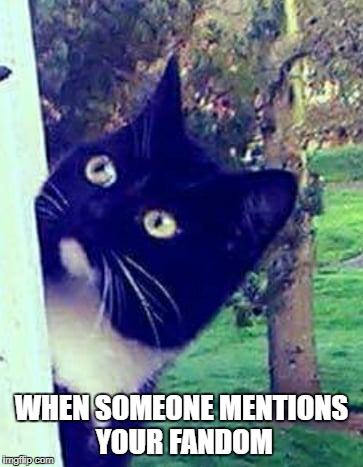 My Reaction Every Time |  WHEN SOMEONE MENTIONS YOUR FANDOM | image tagged in fandom,cats,reference,understanding,same | made w/ Imgflip meme maker