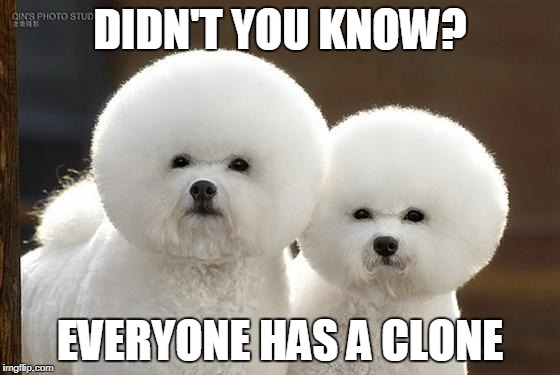 Bichon Frise | DIDN'T YOU KNOW? EVERYONE HAS A CLONE | image tagged in bichon frise | made w/ Imgflip meme maker