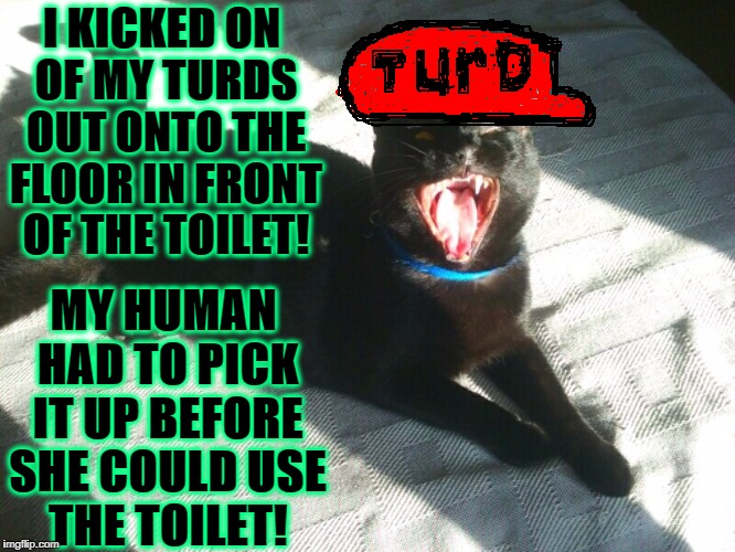 JERK FACE | I KICKED ON OF MY TURDS OUT ONTO THE FLOOR IN FRONT OF THE TOILET! MY HUMAN HAD TO PICK IT UP BEFORE SHE COULD USE THE TOILET! | image tagged in jerk face | made w/ Imgflip meme maker