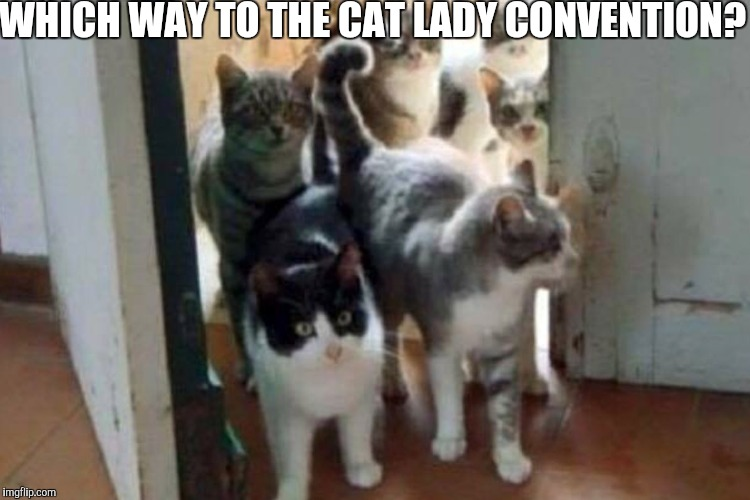 WHICH WAY TO THE CAT LADY CONVENTION? | made w/ Imgflip meme maker