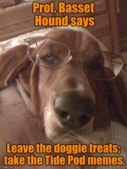 When dogs evolve | Prof. Basset Hound says Leave the doggie treats; take the Tide Pod memes. | image tagged in memes,basset hound,professor,treats,tide pods,funny | made w/ Imgflip meme maker