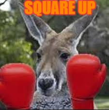 SQUARE UP | image tagged in fight,kangaroo,thefighter,australia,angry | made w/ Imgflip meme maker