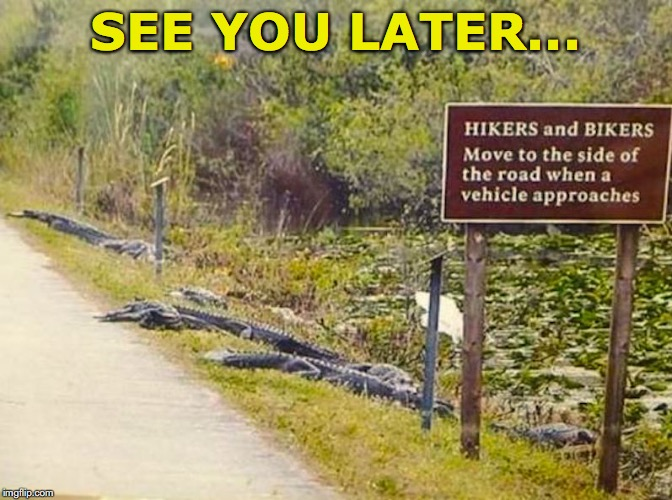 Who put up this sign anyway? | SEE YOU LATER... | image tagged in aligator,funny signs,dangerous | made w/ Imgflip meme maker