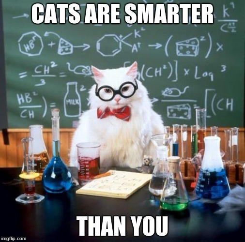 Chemistry Cat Meme | CATS ARE SMARTER THAN YOU | image tagged in memes,chemistry cat | made w/ Imgflip meme maker
