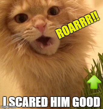ROARRR!! I SCARED HIM GOOD | made w/ Imgflip meme maker