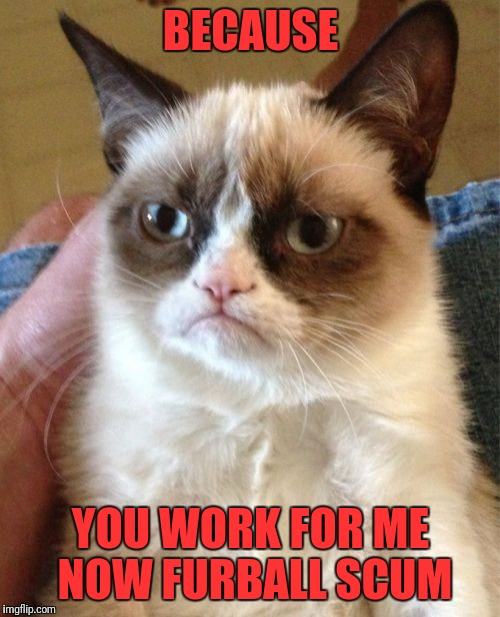 Grumpy Cat Meme | BECAUSE YOU WORK FOR ME NOW FURBALL SCUM | image tagged in memes,grumpy cat | made w/ Imgflip meme maker