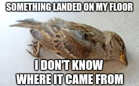 SOMETHING LANDED ON MY FLOOR I DON'T KNOW WHERE IT CAME FROM | image tagged in birdie | made w/ Imgflip meme maker