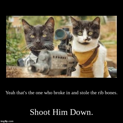 Yeah that's the one who broke in and stole the rib bones. | Shoot Him Down. | image tagged in funny,demotivationals | made w/ Imgflip demotivational maker