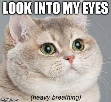 Heavy Breathing Cat Meme | LOOK INTO MY EYES | image tagged in memes,heavy breathing cat | made w/ Imgflip meme maker