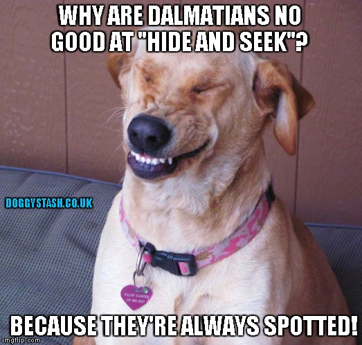 "WHY ARE DALMATIANS NO GOOD AT ""HIDE AND SEEK""? BECAUSE THEY'RE ALWAYS SPOTTED! 
