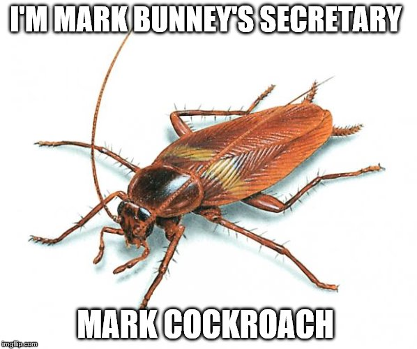 Cockroach | I'M MARK BUNNEY'S SECRETARY MARK COCKROACH | image tagged in cockroach | made w/ Imgflip meme maker