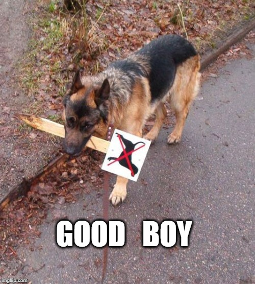 yes dogs |  GOOD   BOY | image tagged in good boy,dogs,lol | made w/ Imgflip meme maker
