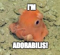 I'm Adorabilis! | image tagged in cute animals,octopus,adorable,meme,funny | made w/ Imgflip meme maker
