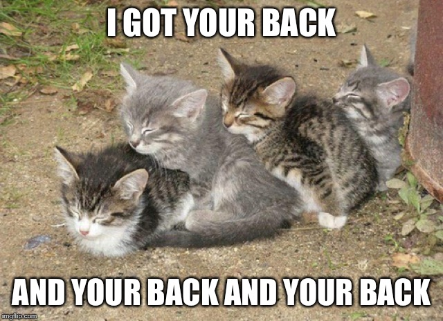 I GOT YOUR BACK AND YOUR BACK AND YOUR BACK | image tagged in memes,cats,backs | made w/ Imgflip meme maker
