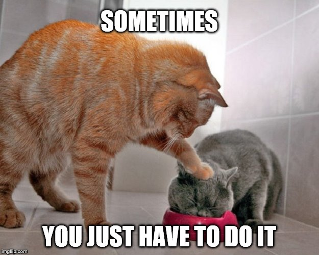 Look Out | SOMETIMES YOU JUST HAVE TO DO IT | image tagged in bad kitty,funny animals,funny cats | made w/ Imgflip meme maker