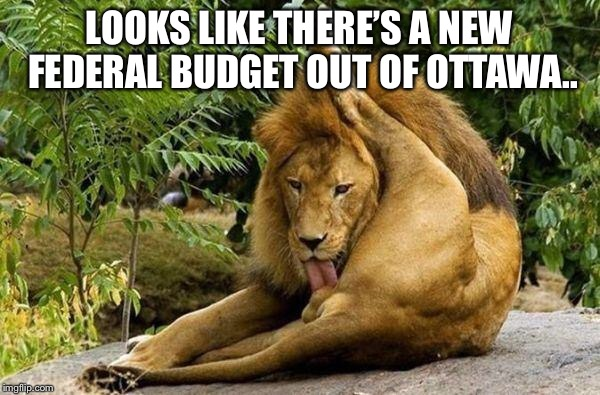 In the news today... | LOOKS LIKE THERE'S A NEW FEDERAL BUDGET OUT OF OTTAWA.. | image tagged in lion licking balls,canadas federal budget | made w/ Imgflip meme maker