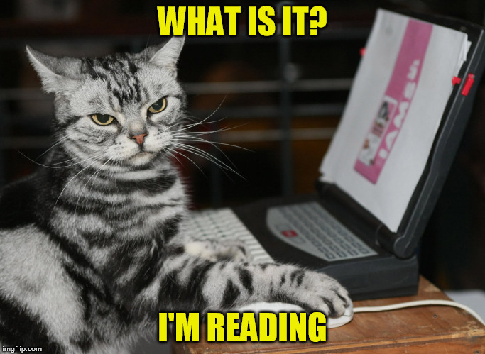WHAT IS IT? I'M READING | made w/ Imgflip meme maker