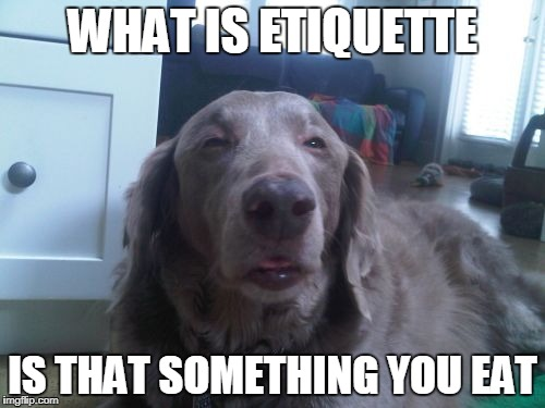 High Dog | WHAT IS ETIQUETTE IS THAT SOMETHING YOU EAT | image tagged in memes,high dog | made w/ Imgflip meme maker