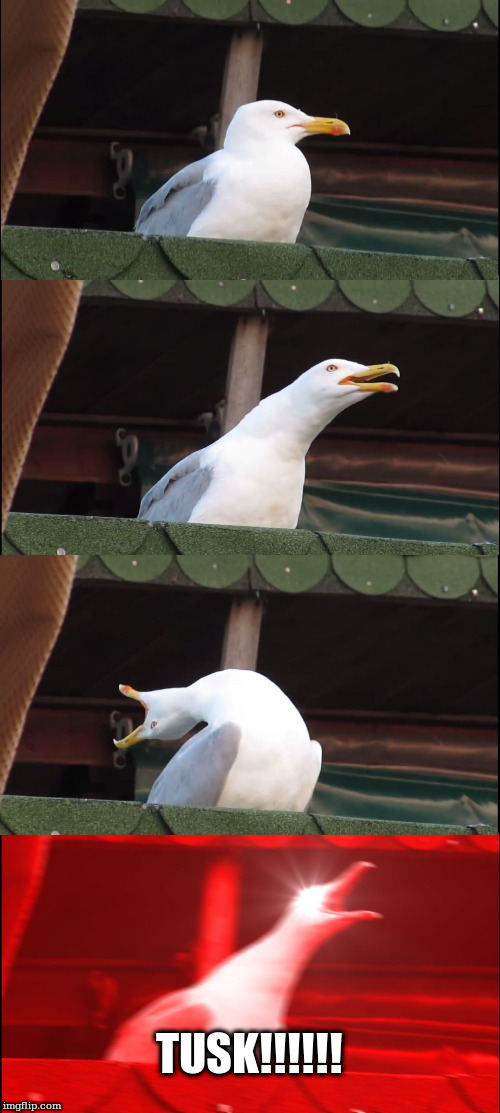 Seagull does Fleetwood Mac | TUSK!!!!!! | image tagged in memes,inhaling seagull | made w/ Imgflip meme maker