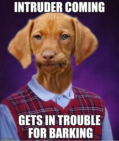 Bad Luck Raydog | INTRUDER COMING GETS IN TROUBLE FOR BARKING | image tagged in bad luck raydog | made w/ Imgflip meme maker
