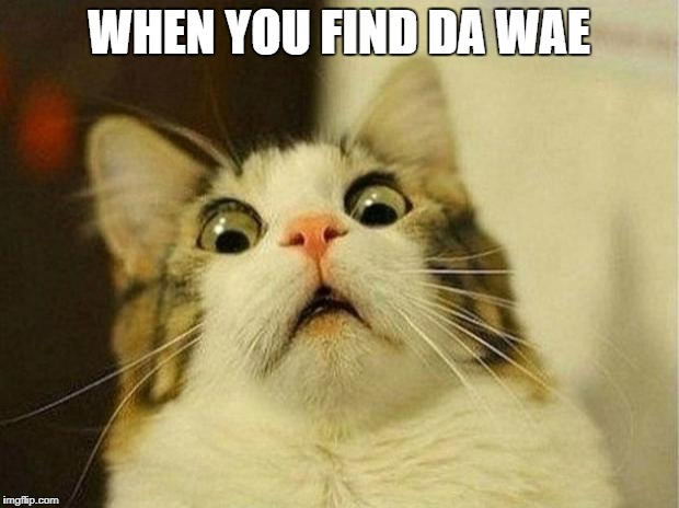 Scared Cat Meme | WHEN YOU FIND DA WAE | image tagged in memes,scared cat | made w/ Imgflip meme maker