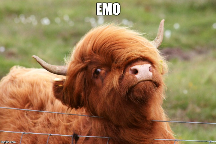 EMO | image tagged in emo cow | made w/ Imgflip meme maker