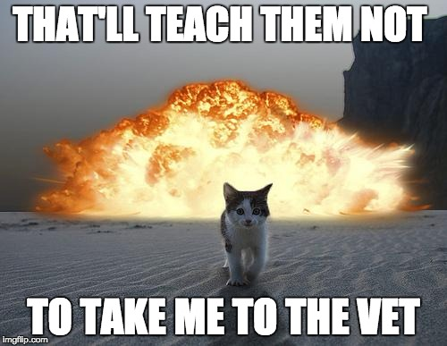 no vets | THAT'LL TEACH THEM NOT TO TAKE ME TO THE VET | image tagged in cat explosion | made w/ Imgflip meme maker