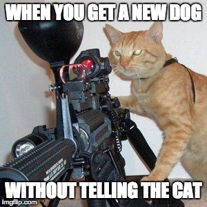 savage cat | WHEN YOU GET A NEW DOG WITHOUT TELLING THE CAT | image tagged in cat with gun | made w/ Imgflip meme maker