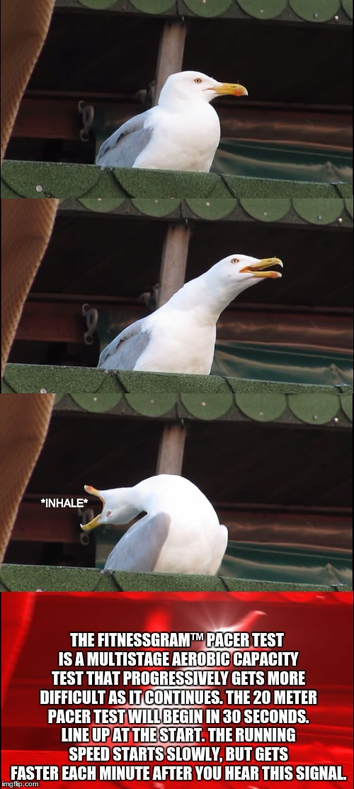 Screaming seagull | *INHALE* THE FITNESSGRAM™ PACER TEST IS A MULTISTAGE AEROBIC CAPACITY TEST THAT PROGRESSIVELY GETS MORE DIFFICULT AS IT CONTINUES. THE 20 ME | image tagged in fitness,memes,seagull | made w/ Imgflip meme maker