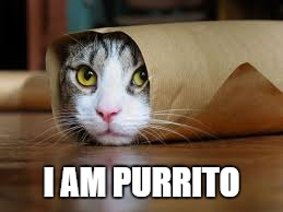 Funny animals | I AM PURRITO | image tagged in funny animals | made w/ Imgflip meme maker