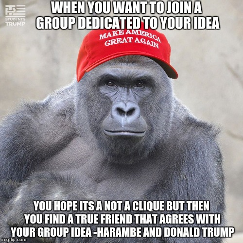 MAGA Harambe | WHEN YOU WANT TO JOIN A GROUP DEDICATED TO YOUR IDEA YOU HOPE ITS A NOT A CLIQUE BUT THEN YOU FIND A TRUE FRIEND THAT AGREES WITH YOUR GROUP | image tagged in maga harambe | made w/ Imgflip meme maker