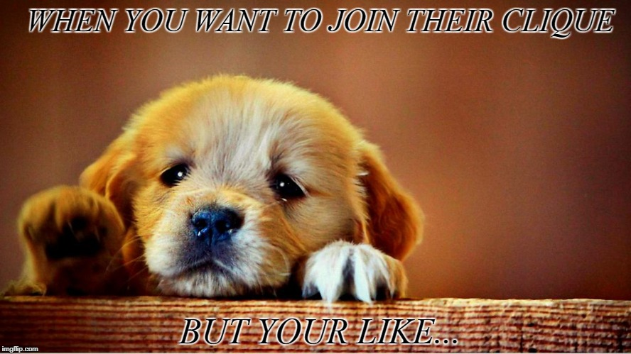 WHEN YOU WANT TO JOIN THEIR CLIQUE BUT YOUR LIKE... | image tagged in dogs | made w/ Imgflip meme maker
