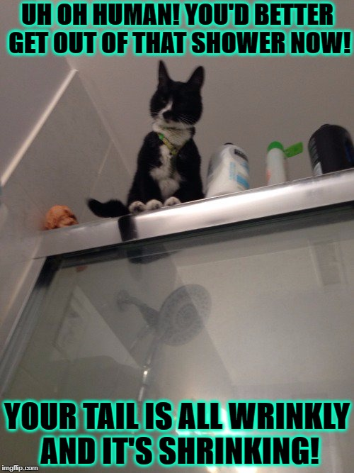 UH OH HUMAN! YOU'D BETTER GET OUT OF THAT SHOWER NOW! YOUR TAIL IS ALL WRINKLY AND IT'S SHRINKING! | image tagged in shower cat | made w/ Imgflip meme maker