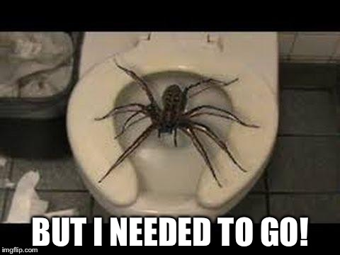 spider toilet | BUT I NEEDED TO GO! | image tagged in spider toilet | made w/ Imgflip meme maker