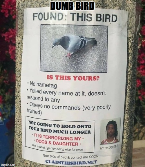 DUMB BIRD | image tagged in dumb,bird,lost,funny signs | made w/ Imgflip meme maker