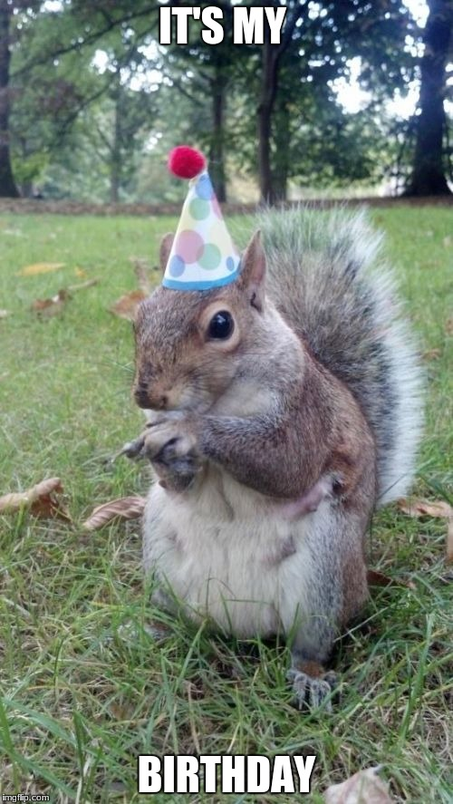 I'm finally 14 |  IT'S MY; BIRTHDAY | image tagged in memes,super birthday squirrel,birthday,squirrel | made w/ Imgflip meme maker