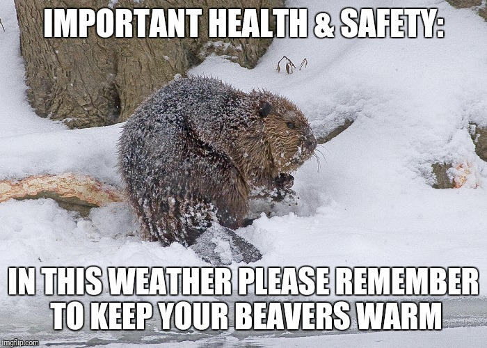 Warm Beaver Health & Safety |  IMPORTANT HEALTH & SAFETY:; IN THIS WEATHER PLEASE REMEMBER TO KEEP YOUR BEAVERS WARM | image tagged in warm,beaver,frozen,cold,weather,safety | made w/ Imgflip meme maker