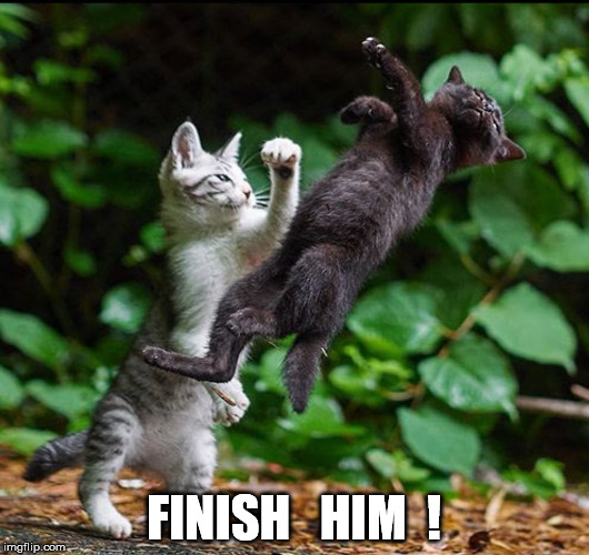 Finish Him ! | FINISH   HIM  ! | image tagged in finish him,mortal combat,kitty,cat | made w/ Imgflip meme maker