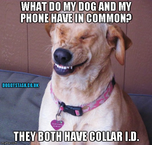 WHAT DO MY DOG AND MY PHONE HAVE IN COMMON? THEY BOTH HAVE COLLAR I.D. | image tagged in laughing dog | made w/ Imgflip meme maker