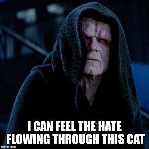 I CAN FEEL THE HATE FLOWING THROUGH THIS CAT | made w/ Imgflip meme maker