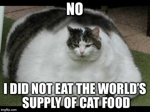 Fat Cat | NO I DID NOT EAT THE WORLD'S SUPPLY OF CAT FOOD | image tagged in fat cat | made w/ Imgflip meme maker