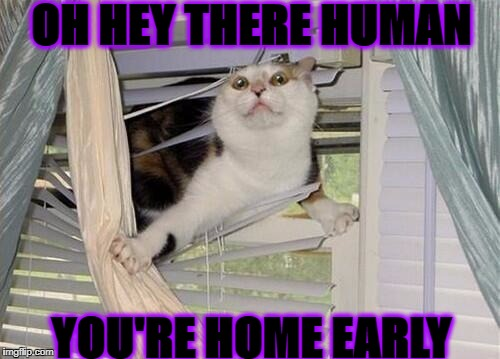 OH HEY THERE HUMAN YOU'RE HOME EARLY | image tagged in you're home early | made w/ Imgflip meme maker